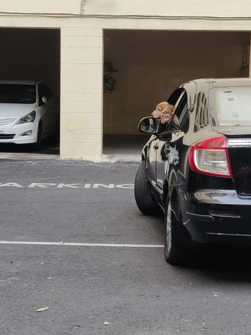 niemieckie bramy garażowe